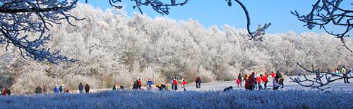 Bosvennetjes liggen vaak beschut en hebben het eerste ijs